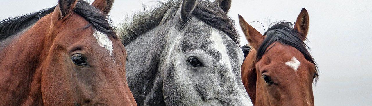 Asociación Equitación Positiva